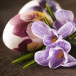 Painted eggs and crocus on Easter - Stock Photo