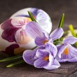 Painted eggs and crocus on Easter — Stock Photo #9771691