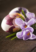 Painted eggs and crocus on Easter — Stok fotoğraf
