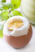 Hard-boiled egg — Stock Photo