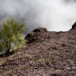 Single shrub on the Mount Vesuvius - Stock Photo