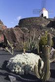 Lanzarote - Jardin de Cactus — Stock Photo