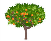 Mandalina ağacı — Stok Vektör
