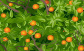 Tangerine tree foliage seamless background — Stock Vector