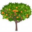 Mandarin tree - Stock vektor
