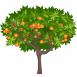 Mandarin tree - 