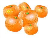 Vector mandarin — Stock Vector
