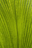 Beautiful green leaf — Stock Photo