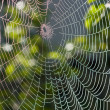 Royalty-Free Stock Photo: Spider web under sunlight