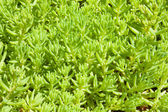 Decorative plants cover macro shot — Stock Photo