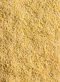Millet grains background — Stock Photo