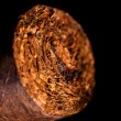 Stock Photo: Tobacco leaves twisted in a cigar