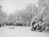 Snow view — Stockfoto