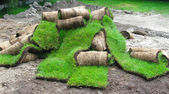 Grass on a roll — Stock Photo