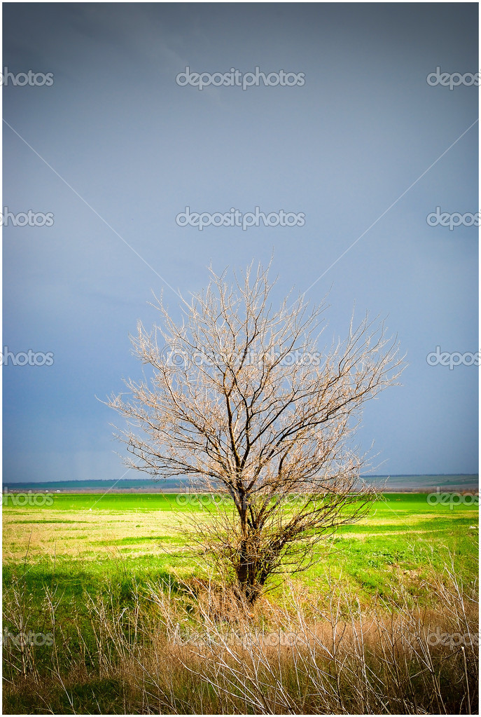 Precipitation in the village — Stock Photo #10193601