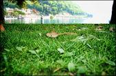 Green meadow — Стоковое фото
