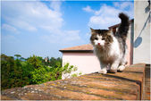 Outdoor cat — Stock Photo