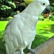 A white cockatoo with yellow tuft — Stock Photo