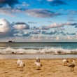 Seabirds on a beach — Stock Photo