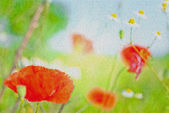 Red poppy wallpaper — Stock Photo