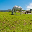 Wild horses in nature - Stock Photo