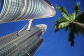 Petronas Towers and palm tree — Stock Photo
