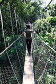 Canopy Walk - Malaysia — Stock Photo