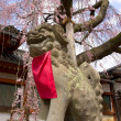 Statue of dog guard komainu under sakura tree — Stock Photo