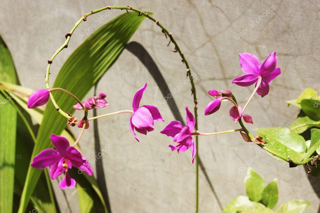Orquideas terrestres for Cuidado de las orquideas moradas