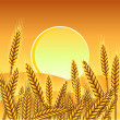 Background with ripe yellow wheat ears, vector illustration. — Stock Vector #10182600
