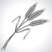 Ripe black wheat ears isolated, vector illustration. — Vector de stock
