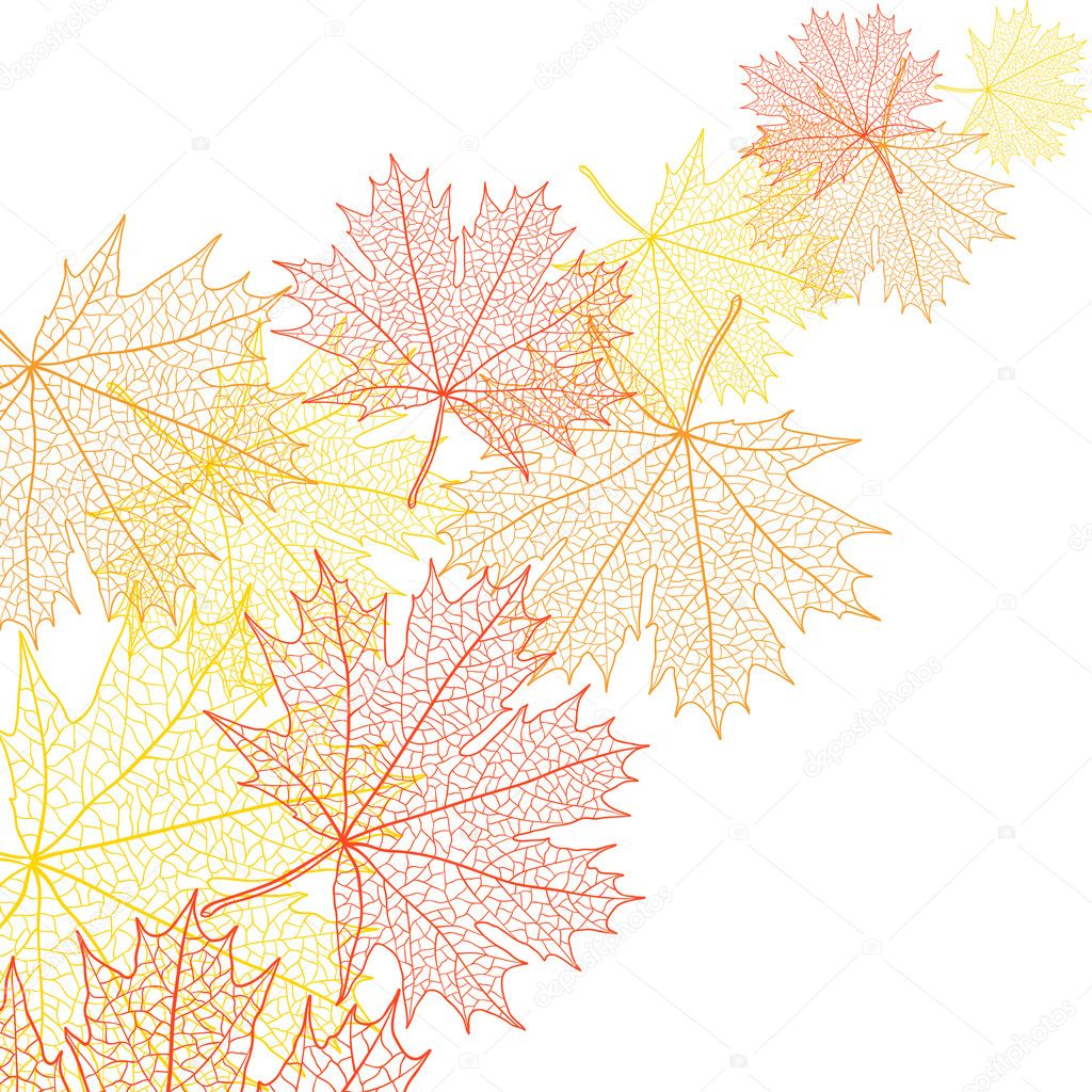 Autumn macro leaf of maple. Vector bacground. — Stock Vector #10458130
