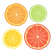 Vector stylised orange, lemon, grapefruit, lime - Stock Vector