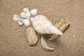 Conch shell — Stock Photo