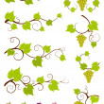 Grape vines design elements set. — Stock Vector #9797051