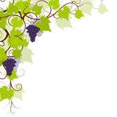 Garden grape vines frame. — Stock Vector
