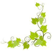 Grape vine frame. — Stock Vector
