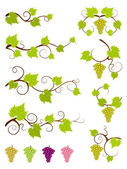 Grape vines design elements set. — Stock Vector
