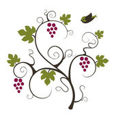 Elegance grape vine with flying birds. — Stock Vector