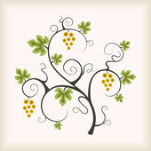 Beautiful golden grape vine. — Stock Vector