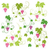 Grape vines set. Vector illustration. — Vecteur