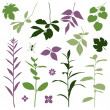 Set of silhouettes of summer plants. — Stock Vector