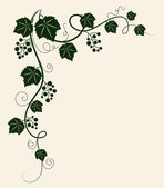Beautiful grape vine green silhouette on beige background. — Stock Vector
