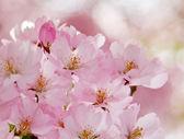 Romantic flowers. — Stock Photo