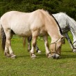 Stock Photo: Grazing horses.