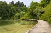 Pasarela de madera en el lago. — Foto de Stock