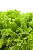 Green lettuce salad 7 — Stock Photo