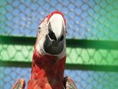 Happy parrot — Stock Photo