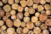 Pile of firewood logs background — Stock Photo