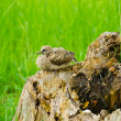 Baby bird waiting for his mother on the stump — Stock Photo #9833198